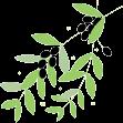 植物油の搾り方画像