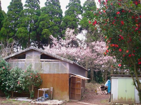 春近し画像